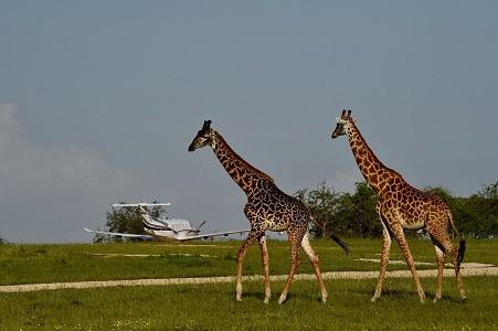 Flying Safari Africa - Bukela Africa Safari